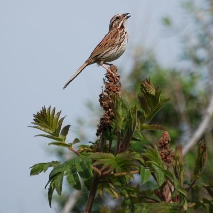 ce_bird