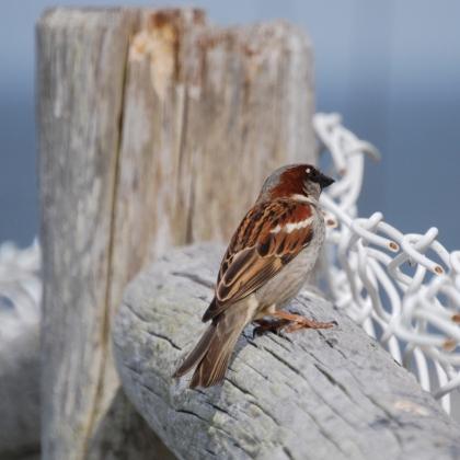 ce_bird2